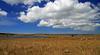 Aubrac (Yvan LEMEUR) Tags: aubrac lozère aveyron ciel nuages extérieur troupeau pastoralisme elevage immensité solitude landscape paysage ambiance france