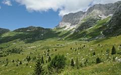 montagna estate (valeriabuzzi) Tags: pascoli tarvisiano prati