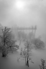 Foggy winter (Théo G-N) Tags: brouillard fog snow winter black white noir et blanc nero bianco neve nebbia paysage landscape paesaggio hiver inverno arbres tree passerelle