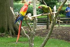 Grant's Farm (Tiger_Jack) Tags: grantsfarm stlouis bird birds