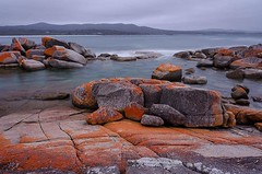 A gloomy afternoon really brought out the red lichen on these rocks at Binalong Bay #bayoffires #eastcoasttasmania #discovertasmania #tasmania #seeaustralia (kleem9) Tags: a gloomy afternoon really brought out red lichen these rocks binalong bay bayoffires eastcoasttasmania discovertasmania tasmania seeaustralia