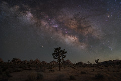 Joshua Tree Nightscape (RyanLunaPhotography) Tags: california fuji fujifilm joshuatree nationalpark socal southerncalifornia xt2 astrophotography cactus desert landscape milkyway night nightscape rokinon 21mm 12mm