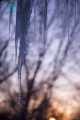 A D y i n g W i n t e r (Chris Robinson Photography) Tags: outside sundown dusk windowphoto icicicle winter winterphotogtaphy frozenwater fun shallowdepth deathofwinter
