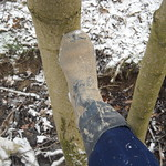 118 -- Dunlop hevea Ripped Wellies -- Bottes Hevea Dunlop trouées --  Gummistiefel Undicht -- Gescheurde laarzen thumbnail