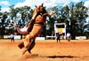 Luciano Rojas e Miralejos (Eduardo Amorim) Tags: gaúcho gaúchos gaucho gauchos cavalos caballos horses chevaux cavalli pferde caballo horse cheval cavallo pferd pampa campanha fronteira quaraí riograndedosul brésil brasil sudamérica südamerika suramérica américadosul southamerica amériquedusud americameridionale américadelsur americadelsud cavalo 馬 حصان 马 лошадь ঘোড়া 말 סוס ม้า häst hest hevonen άλογο brazil eduardoamorim gineteada jineteada