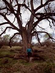 very old tree / semi old human (EllenJo) Tags: pentaxqs1 march25 2018 verdevalley arizona ellenjo