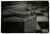 Notre Dame (Tamakorox) Tags: france paris notredame gothic cathedral art japan japanese asia lights shadow film filmphotography analoguecamera b&w canonf1 kodaktmax400 ilfordfiber パリ フランス ノートルダム寺院 ゴシック様式 教会堂 日本 日本人