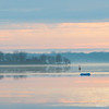 Silent Morning - Matin silencieux (monteregina) Tags: file:name=nb201704028698 québec canada ca nature water eau colors couleurs montérégie ottawariver suroît rivièredesoutaouais vue view waterscape waterfront borddeleau riveside monteregina rose pink ciel sky pastel calme quiet silence tranquil tranquille peaceful paisible nuages clouds rivière river printemps spring pastelsky cielpastel matin morning mood ambiance atmosphère atmosphere himmel wolken glow lueur bleuetrose blueandpink couleurspastel pastelcolors pasteltones pastellayers brume haze brouillard