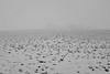 landscape 5 (Anders Öfverström) Tags: snow sweden sörmland landscape bw blackandwhite andersöfverström fujifilmx100s