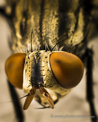 House Fly (Photonistan) Tags: 7dwf macro housefly fly insect photonistan nikon nationalgeography