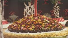 Many flowers and colors at Egypt's Spring Flowers Fair 2018 (Kodak Agfa) Tags: egypt giza flowersshow flowers plants green flowersshow2018 africa mena middleeast northafrica parks gardens spring flowersfair fairs flowersfair2018 botanicalgardens ormanpark ormangarden thisisegypt مصر معرضزهورالربيع الربيع الزهور
