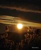 Graminées sous un soleil d'hiver. / Tall grass at winter sunrise (Pentax_clic) Tags: imgp4009 mars2018 robert warren vaudreuil quebec 18135 graminées grass soleil sun