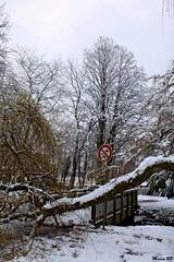 Photos Marco BP (26)_GF (marcbihanpoudec) Tags: bretagne neige plabennec plan deau lac banc arbres