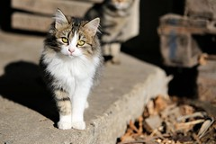 Cat (R. Marco) Tags: canon 6d animali animals cat gatto