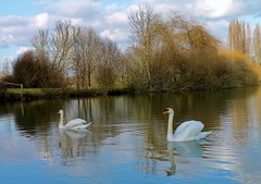 duo (past ' Elle) Tags: etang bleu cygnes arbres automne nuages