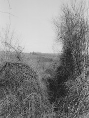 From the Top of the Hill (neukomment) Tags: bw blackwhite film 35mm hpenvy5530scanner canonsureshot85zoom michigan usa crahenvalleypark march 2018 ilfordhp5plus400bw