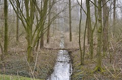Broekpolder Vlaardingen (Hugo Sluimer) Tags: broekpolder vlaardingen zuidholland holland nederland natuur nature natuurfotografie natuurfotograaf naturephotography