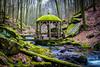Karlstalschlucht (Dr. Gonzo78) Tags: pavillon bäume bach natur steine rheinlandpfalz karlstalschlucht moos laub blätter wasser