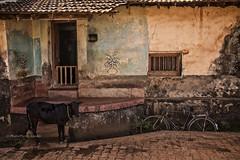 GOKARNA: SCÈNE DE RUE (pierre.arnoldi) Tags: inde india pierrearnoldi photographequébécois karnataka gokarna on1photoraw2018 canon6d objectiftamron photoderue photooriginale photocouleur photodevoyage