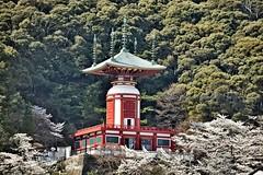 Yakuoji Temple (Erlinda D Yuson) Tags: nikoncorpration tamronsp japan cherry blossom yakuoji temple spring flowers