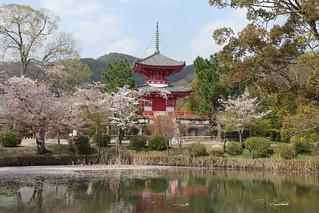 Kyoto Daikakuji Osawa-no-ike Pond 京都 嵯峨野 大覚寺