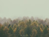 Otoño (Mimadeo) Tags: autumn fall autumnal background tree trees forest copyspace texture pattern brown folliage beautiful landscape leaf leaves yellow orange red season seasonal palette color aerialview distant highangleview far vintage retro filter effect instagram mate