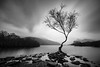 Lonely Tree, Llyn Padarn (ed027) Tags: ifttt 500px lake sunrise sunset dawn riverbank jetty dusk standing water pier idyllic reflection lonely tree black white long exposure mono mood moody beautiful beauty nature trees wood river snowdonia wales uk trip rocks rock