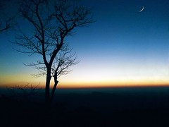 Evening Lights (ainulislam) Tags: moon moonlight night nightsky sky skycrack tree baretree leafless branches eid bd bangladesh sajek sajekvalley evening shade blue twilight outdoor nature natural plant dusk serene ocean clouds texture pattern organic