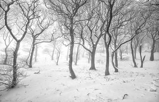 Snow Silhouettes