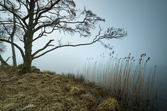 brush strokes (akh1981) Tags: amateurphotography rydalwater manfrotto moody mist nikon nisi nature nationalpark nationalheritage nationaltrust nisifilters outdoors travel trees tranquil tranquility wideangle walking water beautiful uk unesco landscape lakedistrict lake