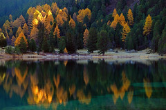 Memories... (ej - light spectrum) Tags: landschaft landscape reflection spiegelung trees bäume lerchen wald forest lake see bergsee switzerland schweiz calm peaceful friedlich fujifilm xt2 fujinon morning morgenlicht sunlight sonnenlicht larkes mountainlake autumn herbst herbstfarben colorful palpuognasee graubünden albula