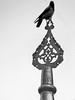 Crow (markb120) Tags: turkey istanbul islam muslim religion byzanth mosque arabic bw