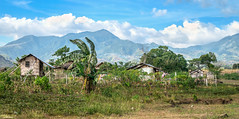 Bamboo houses (vincent.lecolley) Tags: asia philippines negrosoriental ricefield nikon d3300 18200mm house wooden traditional
