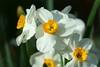 Beautiful spring (Shutter_Hand) Tags: texas usa miguelmendozamuñoz clarkgardens botanicalpark weatherford mineralwells secretgarden parquebotánico jardinbotánico botanico jardin jardinsecreto texasgem texasjewel lenscraft sonyaf100mmf28macro macro sony alpha a99 sonyalphaa99 slta99 flor flora flower blume fiore fleur फूल цветок 꽃 kukka çiçek 花 blomma