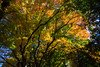 Japan 2017 (sarahmonious) Tags: japan japan2017 japantravel mount fuji mountfuji fujikawaguchiko autumn fall autumn2017 kawaguchi kawaguchiko yamanashi