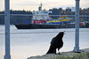 """""""I woke up this morning... my shiny things were gone..."""" (Reva G) Tags: crow bird northvancouver northshore harbourside burrardinlet ocean waterfront beach singing caw corvid"""
