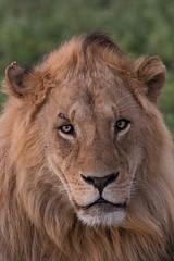 Mug Shot (Hector16) Tags: ndutu wildebeestmigration eastafrica tanzania serengeti migration wildlife nature arusharegion tz