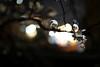 L1000050-2 (Zengame) Tags: kandagawa leica leicasl leicasltyp601 sl summilux summiluxsl50mmf14asph cherryblossom japan river sakura tokyo typ601 ズミルックス ズミルックスsl ライカ 川 日本 東京 桜 神田川 文京区 東京都 jp
