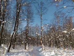 это ручей-речка Волгуша! когда шел к ГАБО - даже не заметил её, совсем скрыта снегом. Ольшаник красив