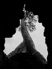 Crack (Janka Takács Sipos) Tags: photo photography cambodia siemreap asia fareast khmer tree temple slit crack leaves hole stone branch root black white blackandwhite blancoynegro bnw monochrome shadow frame silhouette fujifilm fuji x20 fujixseries landscape nature flora sky contrast minimal trees bw