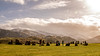 Standing (odell_rd) Tags: castleriggstonecircle lakedistrict keswick 52in2018