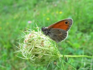 Butterfly 1631