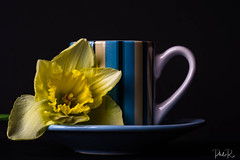 No Artificial Sweetener (PhilR1000) Tags: narcissus daffodil yellow blackbackground mug coffee stripes blue cupsaucer sonyflickraward