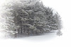 More April Snow (Dave Linscheid) Tags: spring winter snow tree evergreen butterfield watonwancounty mn minnesota usa