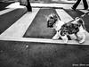 IMG_20180311_075347 (Cougar-Studio) Tags: huaweimate10probycougar huawei mate10pro mobilephone 手機 blackwhite bnw 黑白 dog 狗 西施犬 樂樂 大安區 台北市 台灣