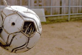 Fussball für wohnungssuchende Vögel       Football for home-seeking birds