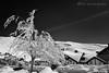 Rincon de Sierra Nevada (Edu.San.) Tags: monocromo bw paisaje montaña sierranevada nieve arbol estación esqui infrarrojo granada andalucía españa