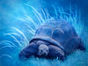 I Have a Blue House (lensletter) Tags: tmi lensletter turtle blue shell amphibian