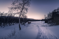 To the light (Sizun Eye) Tags: evening twilight nature trees path snow winter alta finnmark norway sizuneye nikond750 1424mm nikon1424mmf28 nikkor gargia