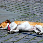 Let Sleeping Dogs Lie thumbnail